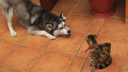 Dogs Try To Make Friends With Cats
