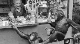 The Copenhagen Zoo In 1955 - Amazing Pics!