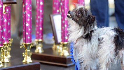 World's Ugliest Dog Comp 2014