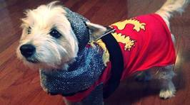Pet Halloween Costumes That You Need Now