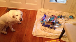 Dogs Who Have No Idea What Happened to Your Stuff