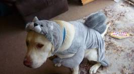 ZM's Pets in Costume!