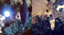 Fletch, Vaughan and Megan's Cats in Christmas Trees