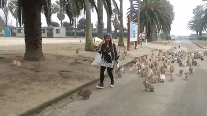 The Cutest Little Rabbit Army