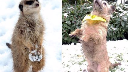 This Abandoned Homeless Dog Thinks He's A Meerkat