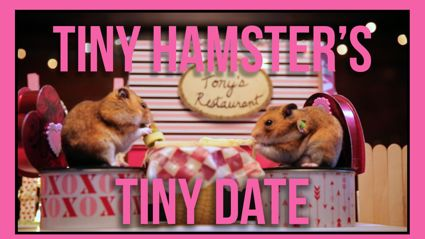Hamsters Go On A Date...Actually