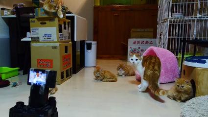 Cat Vs Robot Battle
