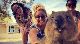 Head Over to Australia and Join the Trend of Getting a Quokka Selfie