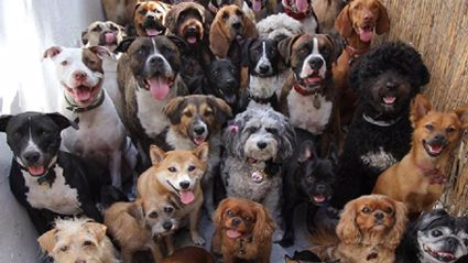 Photographer Somehow Gets 30 Dogs to Pose For Camera