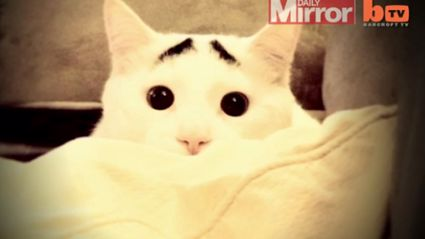 Cat With Awesome Eyebrows Goes Viral