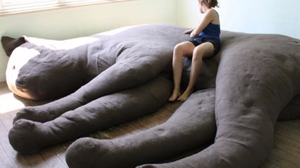 A Cat Couch?