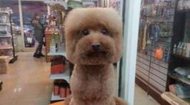 There's A New Trend In Taiwan To Give Dogs Perfectly Round Or Square Haircuts