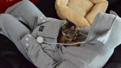 This Cozy Sweatshirt Has a Cat-Sized Pouch So Little Animals Can Snuggle Inside