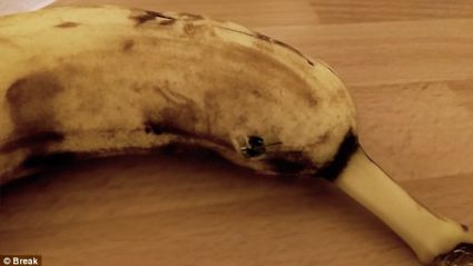 Video Captures The Terrifying Moment A Spider Bursts Out Of A Banana