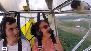 Cat News: Surprise Passenger on Microlight Flight