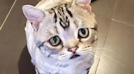 Meet the Saddest Cat In the World