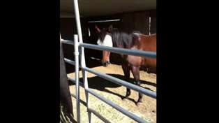 Man Teaches 'Disrespectful' Horse to Recognise Him As A Leader In 6 Minutes