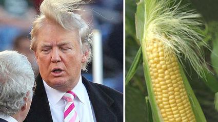 Random Things That Look Just Like Donald Trump
