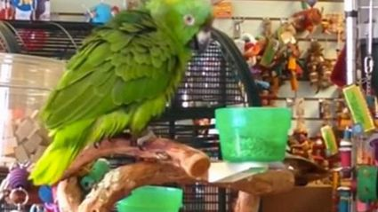 "Real or Fake? Parrot Sings ""Everything Is Awesome"" From Lego Movie"
