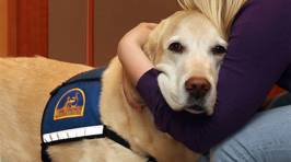 These Dogs Comfort People Who Have to Testify In Court