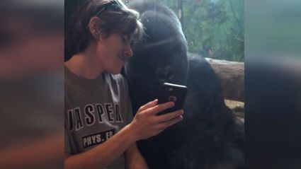 Gorilla Reacts to Seeing Photos Of Other Gorillas On iPhone