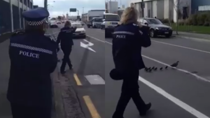 Police Escort Ducklings Across Busy Christchurch Road