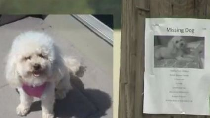 Lost Dog Recognises Owners On TV & Is Returned to Them