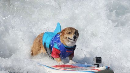 The Most Adorable Surf Competition Ever