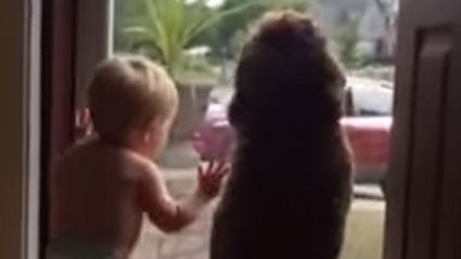Toddler and Dog Have Identical, Joyful Freakouts When Their Dad Comes Home