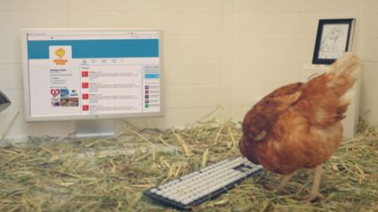 Poultry Company Has Live Chicken Running Its Twitter Account