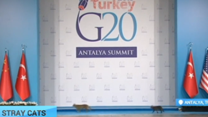 Cat News: Cats Breach Security At G20 Summit