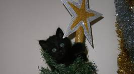 Photos: Fletch's Cats in Christmas Trees 2015