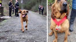 Dog Accidentally Runs Half-Marathon, Finishes Seventh Place