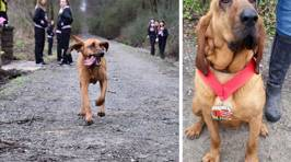 Dog Accidentally Runs Half-Marathon, Finishes Seventh Place