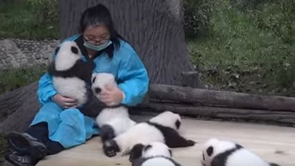 There is a Job Where You Can Get Paid $32,000 to Hug Baby Pandas