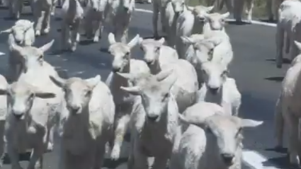 Watch: This Video Filmed in NZ by A Tourist Has Gone Viral