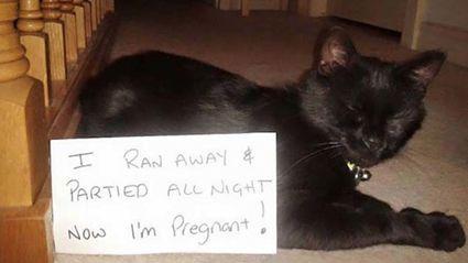 16 Brilliant Cat Shaming Pics