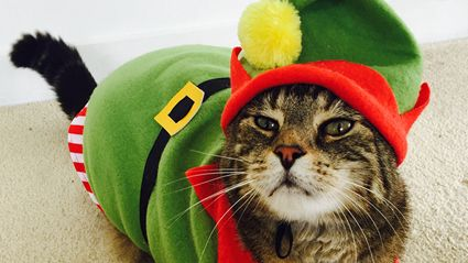 PHOTOS: Make Your Cat A Star of Cat News Entries