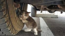 Truck Driver Saves Petrified Kitten