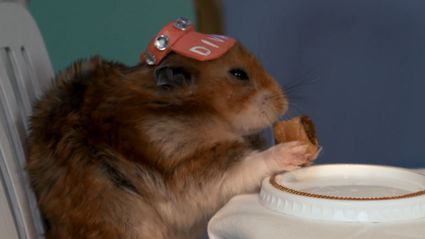 Elderly Americans Try Kiwi Treats...With Hamsters!