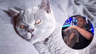 Watch Fletch's cat Karen make his television debut!