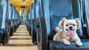 Why you might be seeing more doggos on your commute