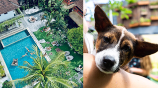 This Bali hotel lets you play with rescued puppies by the pool!