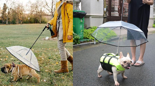 If you have a dog, you NEED one of these dog umbrellas!