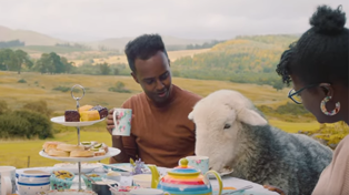 Airbnb now offers 'animal experiences' for travellers!
