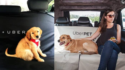 Uber now offers a service for pets!