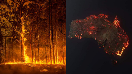 How you can help out with the Australian bush fires