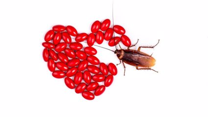 This zoo will name a cockroach after your ex this Valentine's!