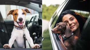 Uber Pets launches in New Zealand, TOMORROW!