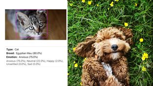 This app will help you know if your pet is happy, sad and more!